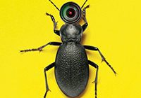 beetle on yellow background, mini-camera for a head