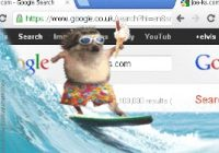 hedgehog on a surfboard with google search page in BG