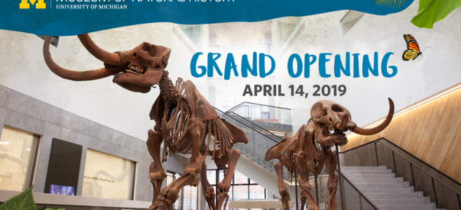 "dinosaurs skeletons ""Grand Opening April 13, 2019"""
