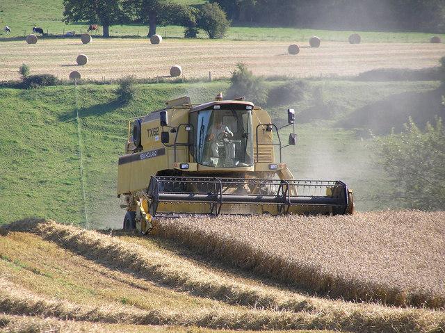 Combine harvesting wheat field.