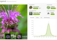 "(Image with flowers on the left, one large purple Wild Bergamont flower with thin petals reaching upward with five smaller photos of similar purple flowers listed at the bottom, and a graph on the left which shows a spike from June to August in the ""Seasonality"" tab. There are three other tabs: ""History,"" ""Sex,"" and ""Plant Phenology."" Above those tabs is information on the observations the data reflects, including ""Top Observer"" (aaron carlson), ""Top Identifier"" (pynklynx), ""Last Observation"" (August 05, 2020) and ""Total Observations"" (13,033).)"