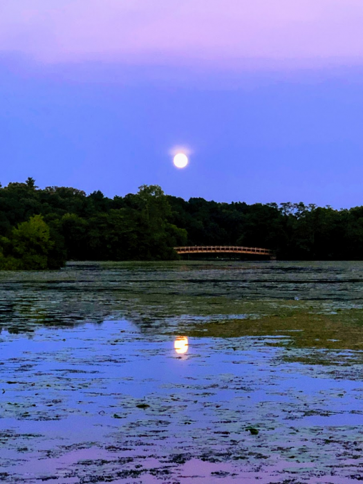 Photograph of a sunset at Gallup Park. The picture shows a pond in the foreground, a row of trees and a footbridge in the middle of the picture, and a white floating sun in a blue, purple and pink-streaked sky. The trees and sun are reflected in the water.