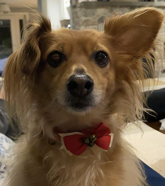 Archie the dog. (Image courtesy Darin Leese.)
