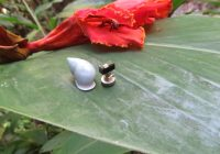A teeny tiny computer is perched next to a light gray snail shell on a wide green leaf.